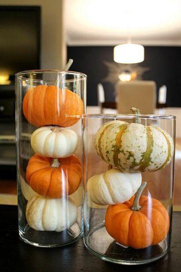 c6cf8f9db526da79babd21e7ad99d4ce--mini-pumpkins-small-pumpkins
